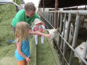 Hunter 4 mos goat farm 025